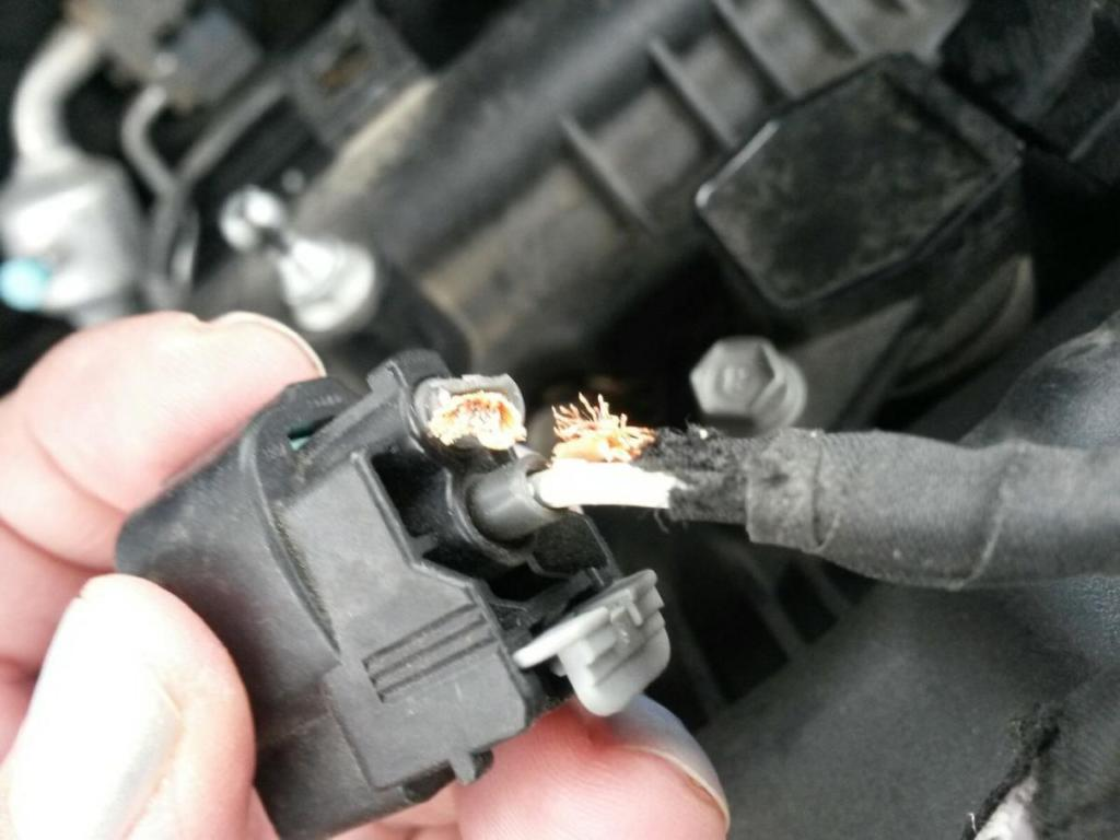 2016 Hyundai Elantra Rodents Chew Soy Based Wire Covering: 2 Complaints