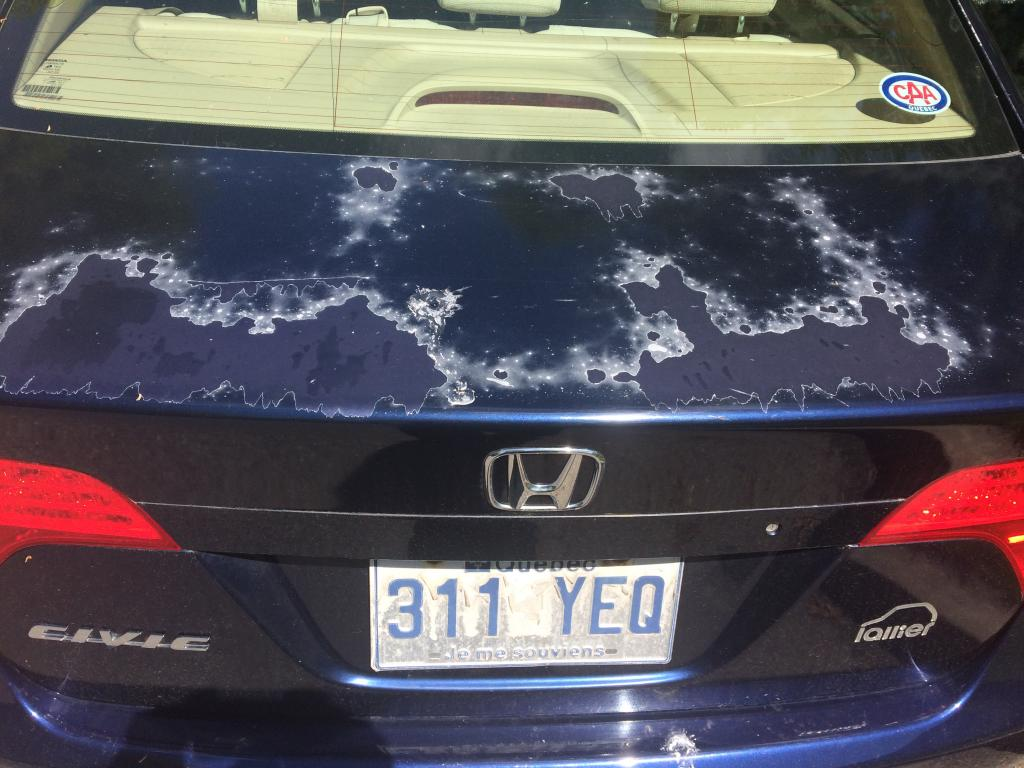 honda civic clearcoat  paint problems  complaints