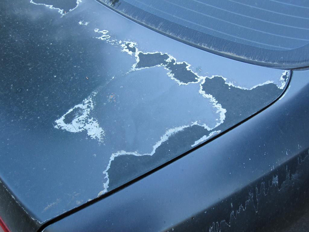1999 Honda Accord Paint Is Peeling 7 Complaints 4 Door