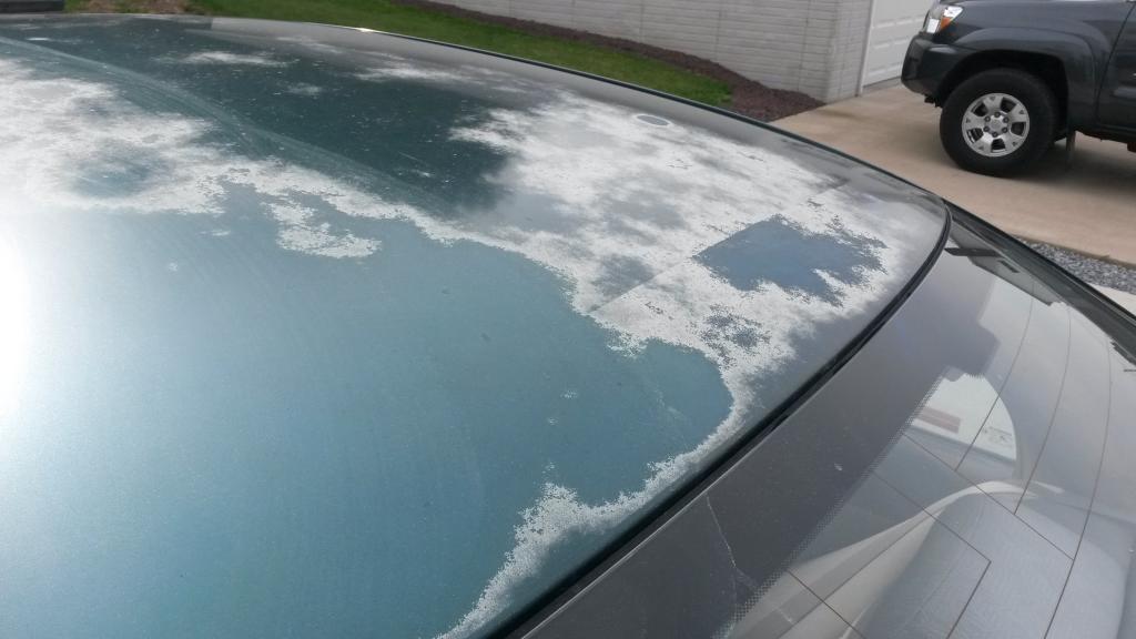 honda civic paintclear coat bubbling peeling   complaints