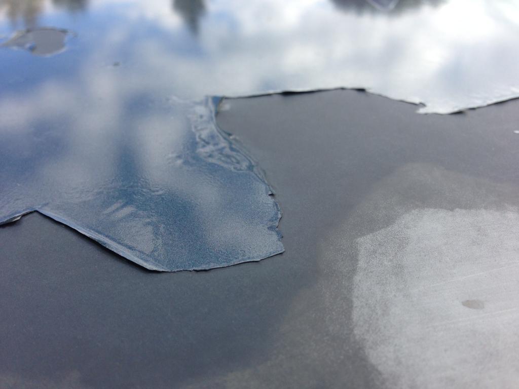 honda pilot paint  shot   hood clear coat  defective  complaints
