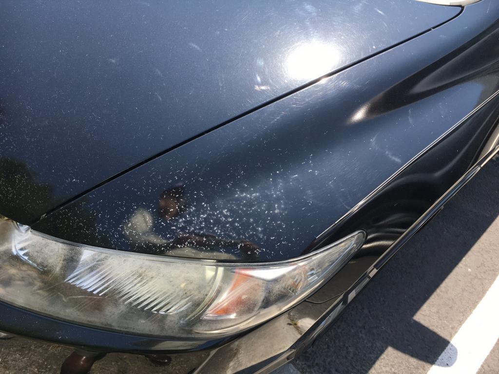 honda civic paint oxidation  cracks  paint  complaints