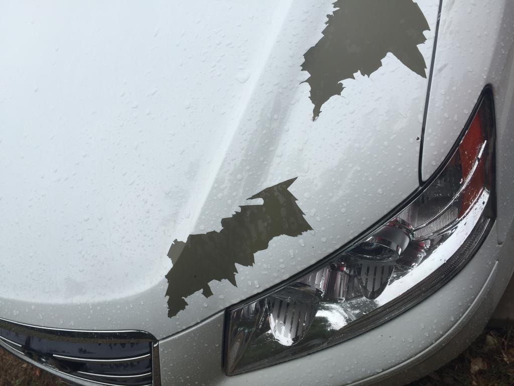 2016 Hyundai Genesis Coupe >> 2010 Hyundai Sonata Paint Is Peeling: 15 Complaints