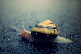A snail on the road