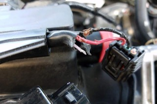 A chewed wiring harness showing exposed copper wiring