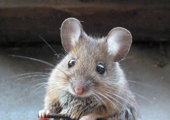 Toyota Soy-Based Wiring Lawsuit Says Rodents Chew Wiring