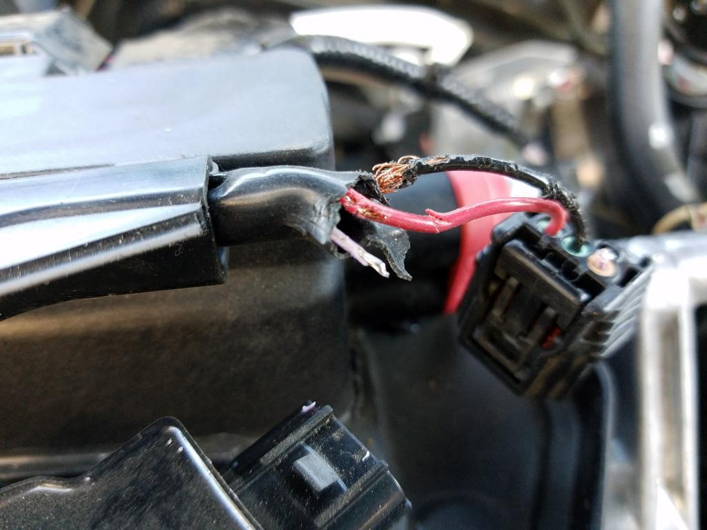 Magnificent Honda Wiring Lawsuit Over Rodent Damage Dismissed Carcomplaints Com Wiring 101 Akebretraxxcnl