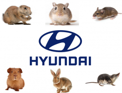 Hyundai Soy-Based Wiring Lawsuit Says Rodents Damage Vehicles