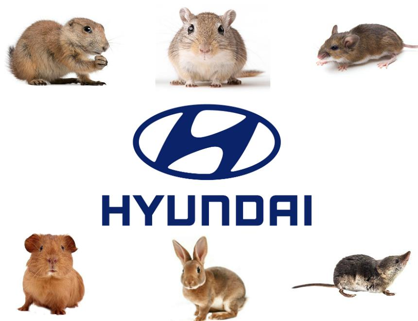hyundai soy based wiring lawsuit %281%29 hyundai soy based wiring lawsuit says rodents damage vehicles vw wiring harness lawsuit at nearapp.co