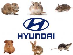 Hyundai Soy-Based Wiring Lawsuit Says Rodents Damage