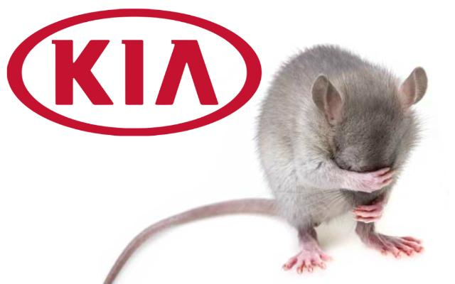 Kia Soy-Based Wiring Chewed by Rodents: Lawsuit | CarComplaints com