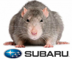Subaru Soy-Based Wiring Lawsuit Filed in Hawaii ... on